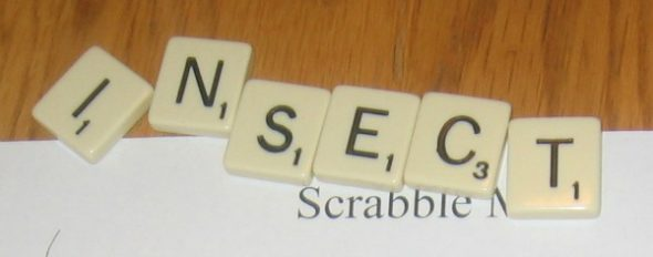 word with scrabble tiles