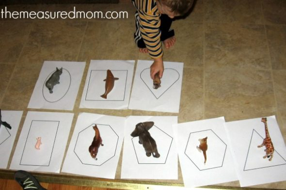 animal math for preschoolers - 2 - the measured mom